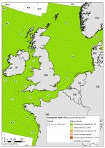 Europese heek - Merluccius merluccius (2018)