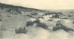 Massart (1908, foto 008)