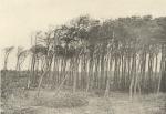 Massart (1908, foto 088)
