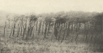 Massart (1908, foto 089)