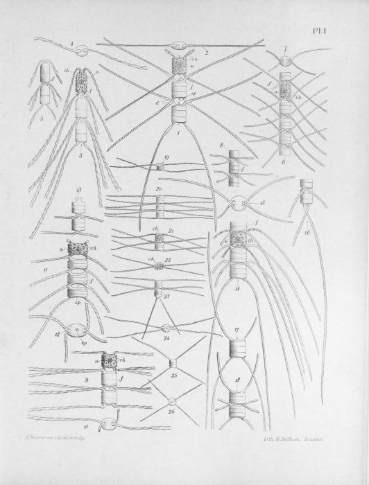 Meunier (1913, pl. 1)
