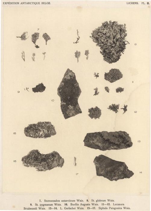 Wainio (1903, pl. 2)