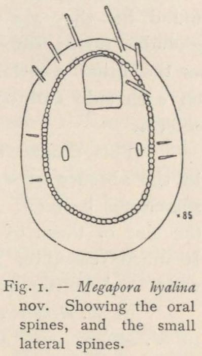 Waters (1904, fig. 1)