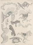 Van Beneden; de Selys Longchamps (1913, pl. 05)