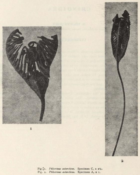 Dilwyn John (1937, fig. 1)