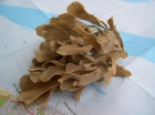 bladachtig hoornwier
