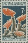Polycarpa sp.