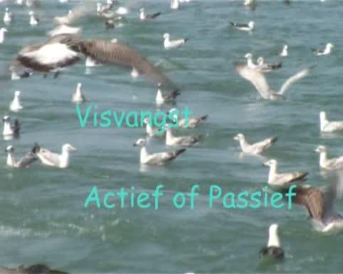 VIDEO: Visserijmethoden
