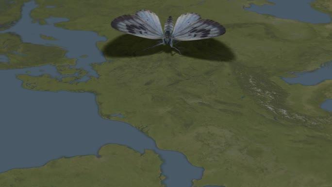 ANIMATION: PESI, A Pan-European Species Directories Infrastructure