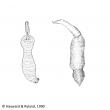 lepelwormen
