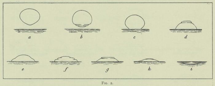 Arctowski (1902, fig. 02)