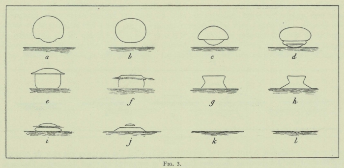 Arctowski (1902, fig. 03)