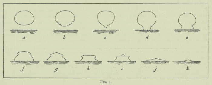 Arctowski (1902, fig. 04)