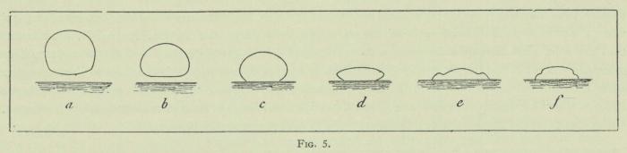 Arctowski (1902, fig. 05)
