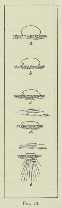Arctowski (1902, fig. 13)