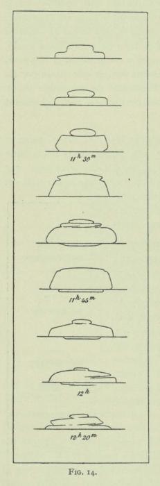 Arctowski (1902, fig. 14)
