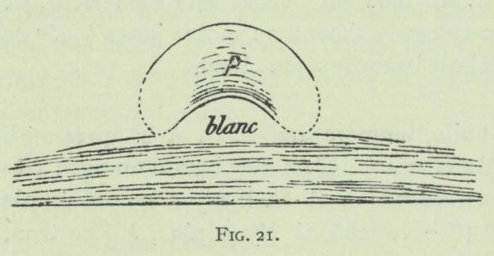 Arctowski (1902, fig. 21)