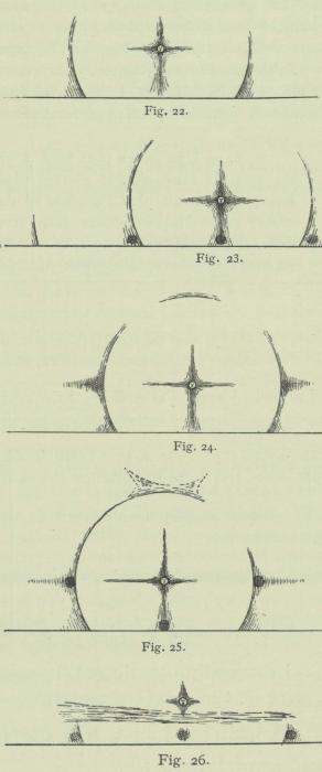 Arctowski (1902, fig. 22-26)