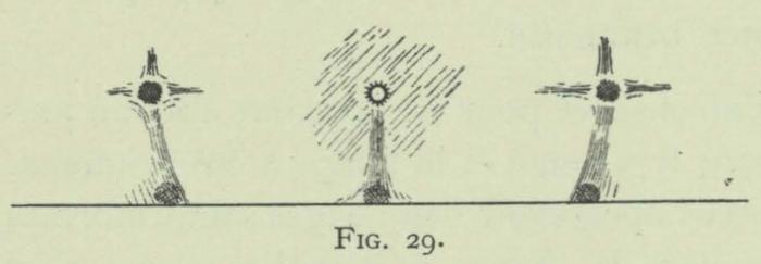 Arctowski (1902, fig. 29)