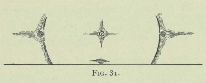 Arctowski (1902, fig. 31)