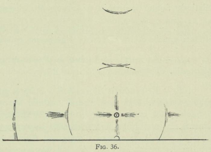 Arctowski (1902, fig. 36)