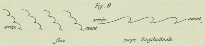 Dobrowolski (1903, fig. 09)