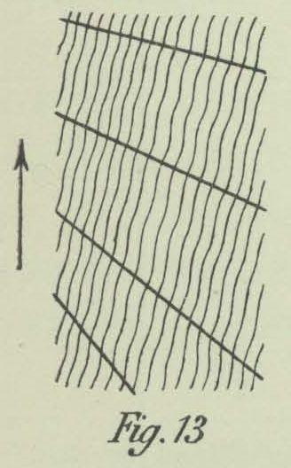 Dobrowolski (1903, fig. 13)