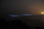 Sea Sparkle: bioluminescent sea