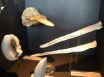 Tentoonstelling Bruinvissen en dolfijnen in België 2011