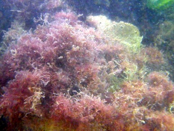 SWG excursie Zeebrugge 20110618