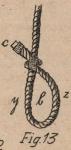 De Jonghe (1912, fig. 13)