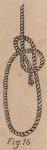 De Jonghe (1912, fig. 16)