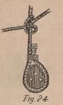 De Jonghe (1912, fig. 24)