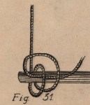 De Jonghe (1912, fig. 31)