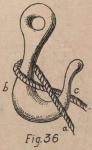 De Jonghe (1912, fig. 36)