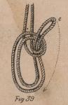 De Jonghe (1912, fig. 39)