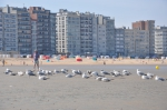 Meeuwen op strand