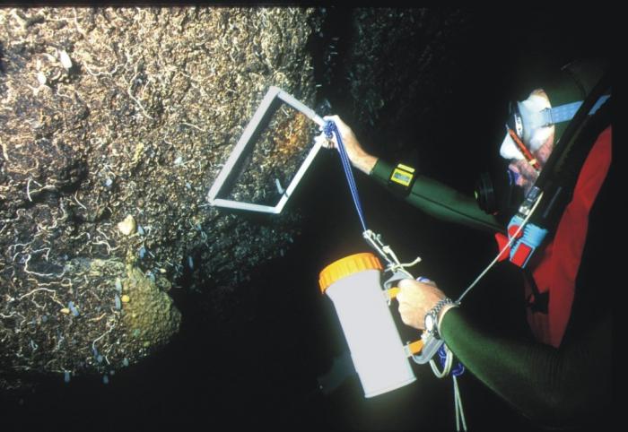 3 PP cave, counting deep-sea hexactinellid sponge Oopsacas minuta.