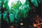 Laminaria hyperborea forest + associated organisms