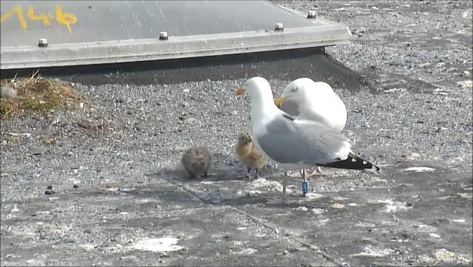 Seagull videos
