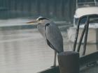 Aan de vismijn te Nieuwpoort